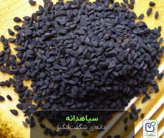 سیاهدانه : دانه ای شگفت انگیز